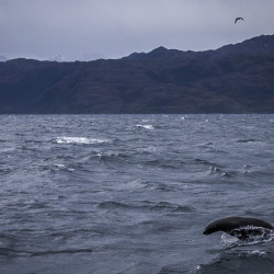 Whale Watching Chile - Punta Arenas - Megallanstraße © PhotoTravelNomads.com