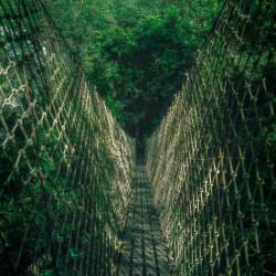 Laos Reiseblog: Tree Top Explorer - Jungle Bridge - Bolvaven Plateau ©PhotoTravelNomads.com