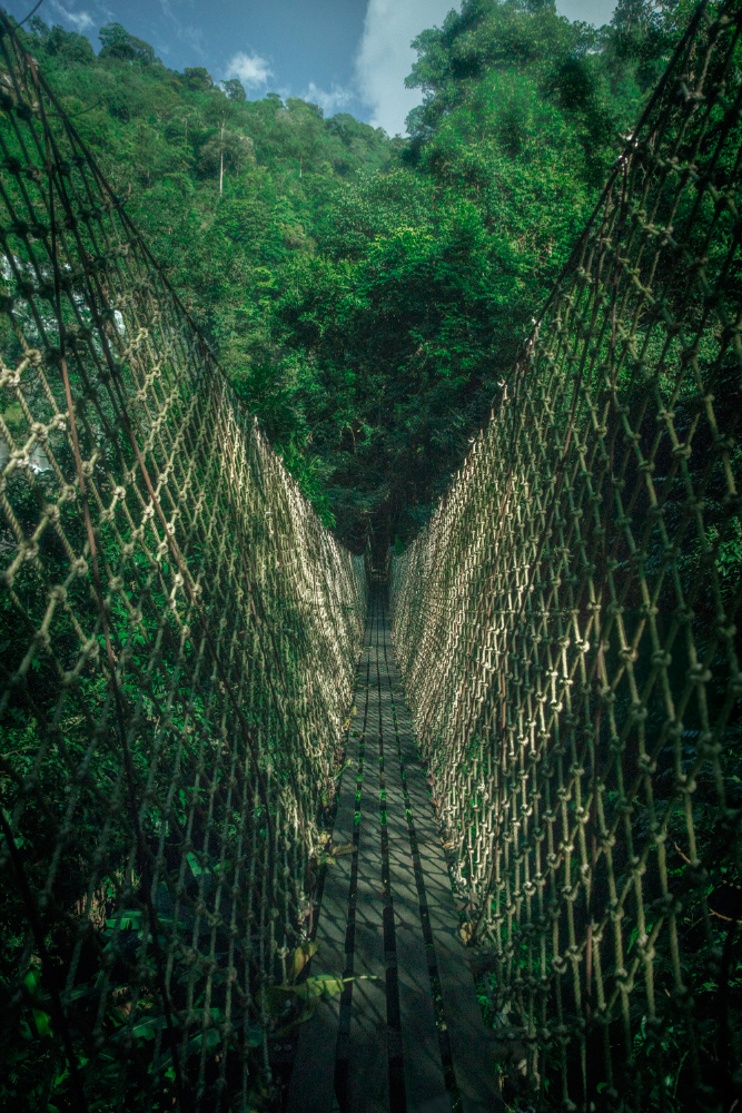 Tree Top Explorer - Jungle Bridge - Bolvaven Plateau © PhotoTravelNomads.com