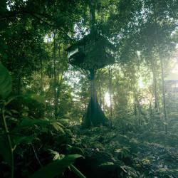 Die Baumhaus-Übernachtung im Jungle von Laos
