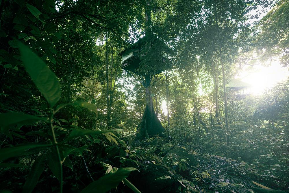 Tree Top Explorer - Treehouse - Baumhaus - Bolvaven Plateau ©PhotoTravelNomads.com