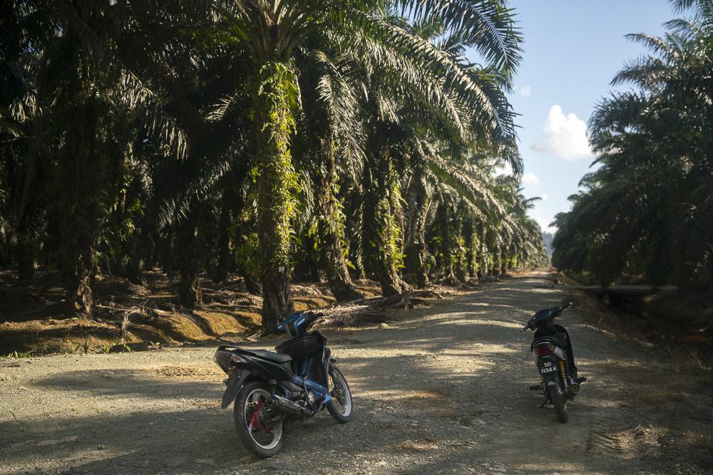 Elefantenjagd mit dem Motorrad durch die Palmenplantagen