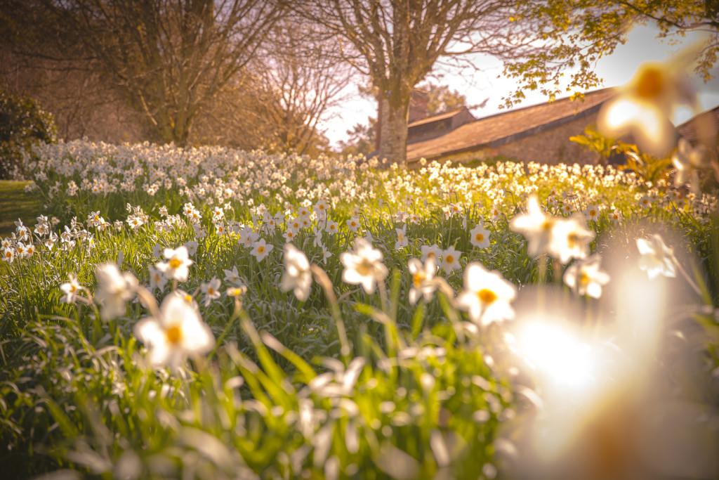 Irland Reiseblog: Garden at Blarney Castle ©PhotoTravelNomads.com