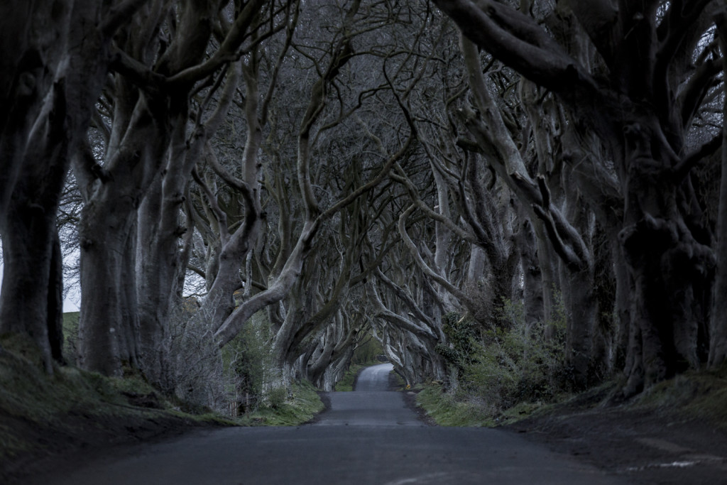 Nordirland Sehenswürdigkeiten: The Dark Hedges von Games of Thrones © PhotoTravelNomads.com