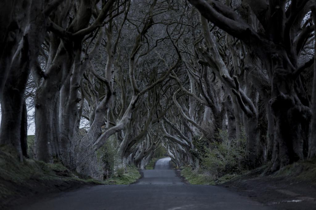 Nordirland Sehenswürdigkeiten: The Dark Hedges von Games of Thrones © PhotoTravelNomads.com