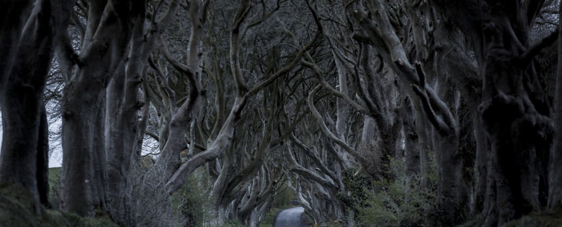 Irland Reiseblog: Nord Irland - The Dark Hedges - Drehort von Games of Throne © PhotoTravelNomads.com