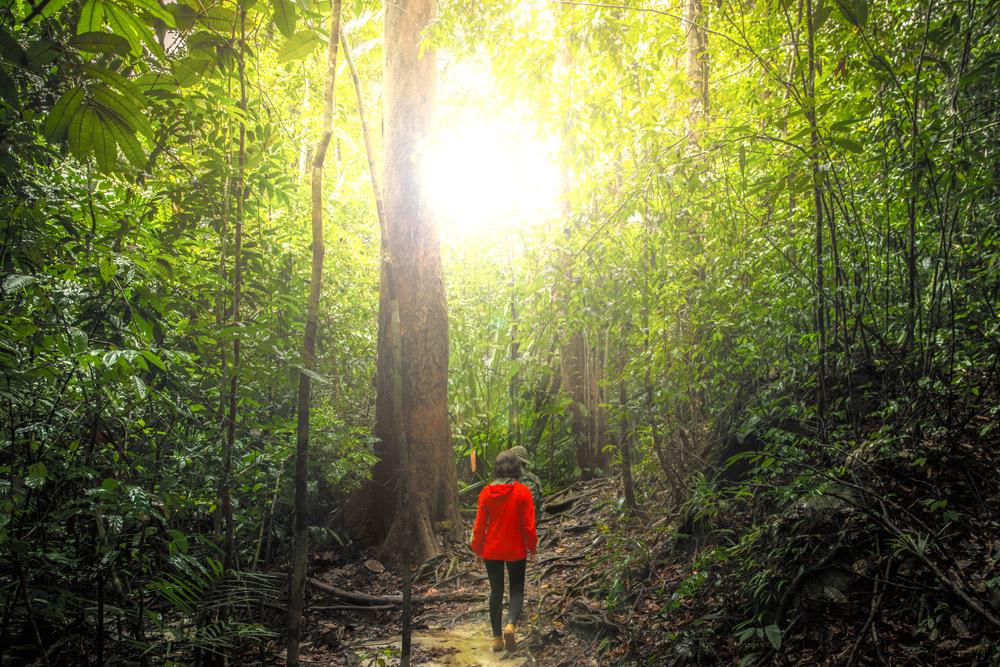 Sehenswürdigkeiten in Borneo: Bako Nationalpark Tour © PhotoTravelNomads.com