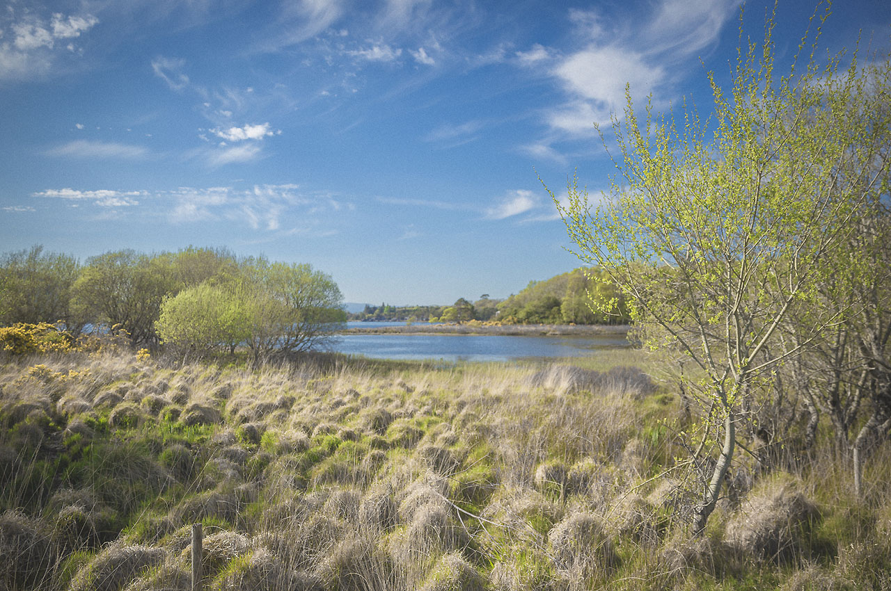 Sehenswürdigkeiten Irland: Killarney National Park - Irland Reisebericht © PhotoTravelNomads.com