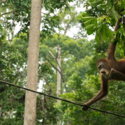Sepilok-Monkeys-09-PhotoTravelNomads