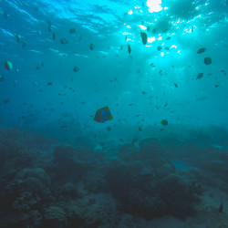 Sipadan Island Dive © PhotoTravelNomads.com