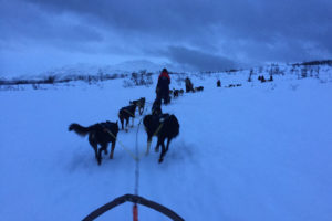 Norway Husky Tour